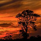 How Many Sunsets? by Bette Devine