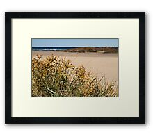 Spinifex Framed Print