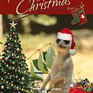Meerkat Santa by Larry Costales