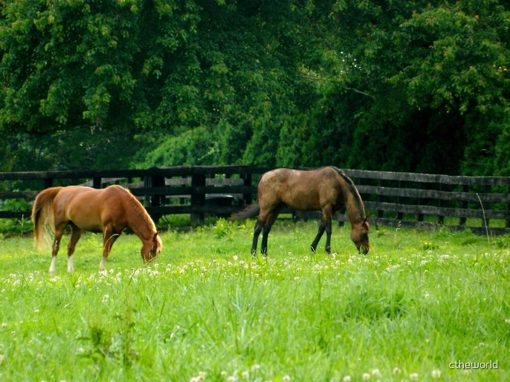 Horse Farm  ^ by ctheworld