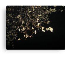 Midnight Branches. Canvas Print