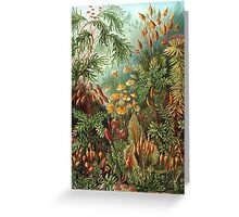 Vintage Nature Greeting Card