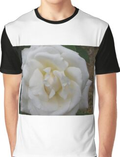 Beautiful Pascali Rose in shade, in my garden. Adelaide Hills. Graphic T-Shirt