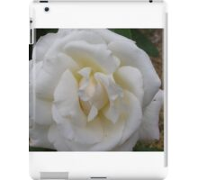 Beautiful Pascali Rose in shade, in my garden. Adelaide Hills. iPad Case/Skin