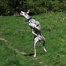 Jumping great dane by turniptowers