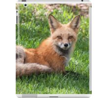 Momma fox looking at me iPad Case/Skin