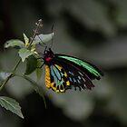 Butterfly wings by emmelined