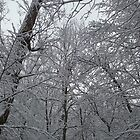 Snow and Trees by Steve Stones