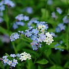 Forget Me Not by Debbie Oppermann