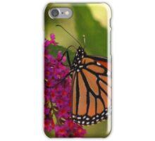 Butterfly feeding on a butterfly bush iPhone Case/Skin