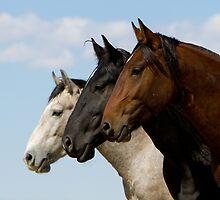 Three Stallions by Kent Keller