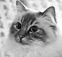 Kitty... by Karen  Helgesen