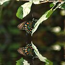 Butterfly By The River by Rick  Friedle