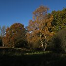 Silver Birch and The Oak by wiggyofipswich