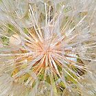 Inside the Dandelion by DanByTheSea