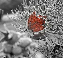 Red by Jennifer Bishop