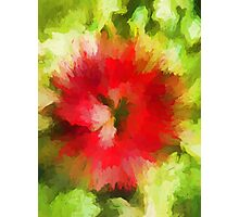 Red Christmas Flower Photographic Print