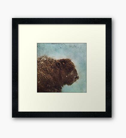 Wood Buffalo Framed Print