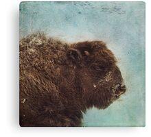Wood Buffalo Canvas Print