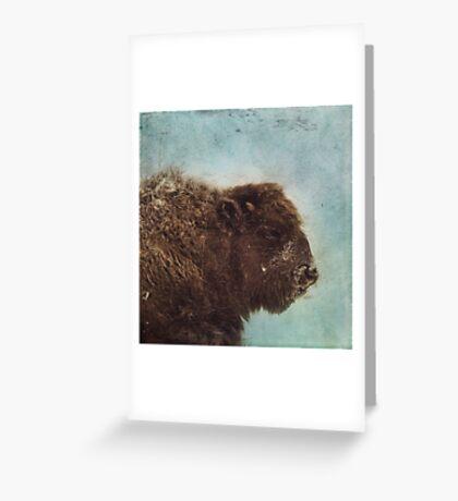 Wood Buffalo Greeting Card