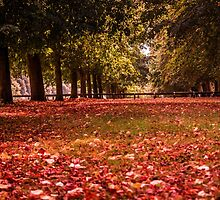 Autumn Scene by ncp-photography