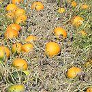 Pumpkin Patch by Martha Medford