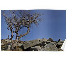 Dartmoor #1 Poster