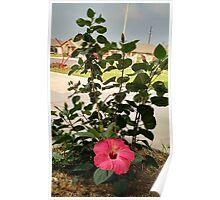 A Flower Amidst Destruction Poster