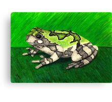 Bird Voiced Tree Frog Canvas Print