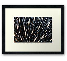 Australian short-beaked echidna Framed Print