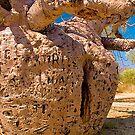 Prison Tree, Derby, Western Australia. by johnrf