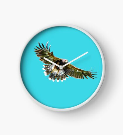 Harris Hawk  Clock