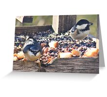 Sunflower seed selectors Greeting Card