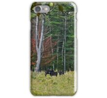 Cows 2 iPhone Case/Skin