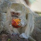 Can`t you see i am eating!! by jozi1
