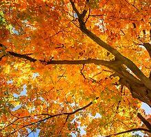 Golden Maple by LudaNayvelt