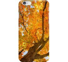 Golden Maple iPhone Case/Skin