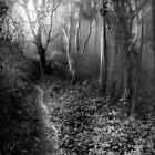 Primordial Woods, Mount Davidson by Richard Mason