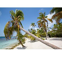 Morrocoy National park, a paradise with coconut trees, white sand and deep blue sky in Venezuela Photographic Print