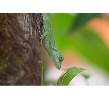 Green Lizard Photographic Print