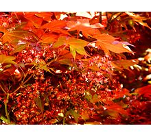 Leaves of Red   ^ Photographic Print