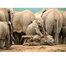 Group of wild elephants in South Africa Photographic Print