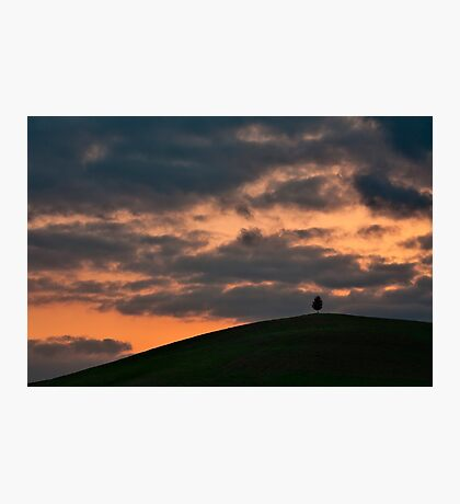 Lonely tree at sunset Photographic Print