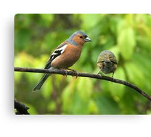 We can't keep on meeting like this.........! Canvas Print