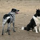 Dog day at the beach............! by Roy  Massicks