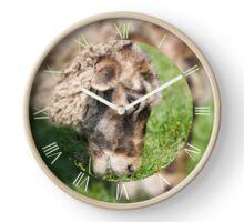 Adult sheep eating grass Clock