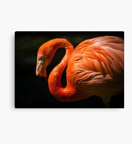 Pink Red Flamingo Bird Nature Animal Birds Canvas Print