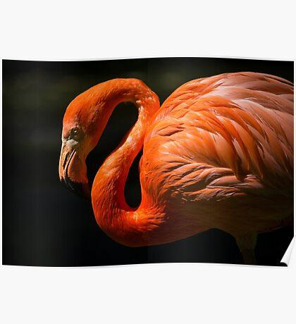 Pink Red Flamingo Bird Nature Animal Birds Poster