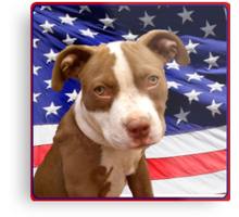 American pitbull Terrier puppy Metal Print