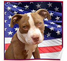 American pitbull Terrier puppy Poster